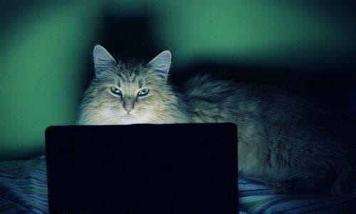 猫フィルター 裁判 アメリカ ロッド・ポントン