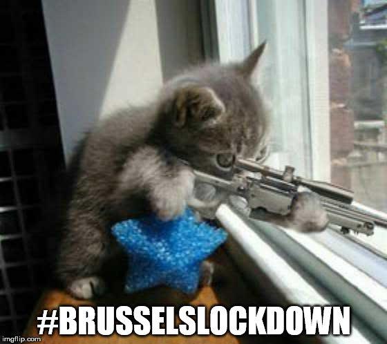 ベルギー、「ネコ」画像でテロリストを撹乱に関連した画像-09