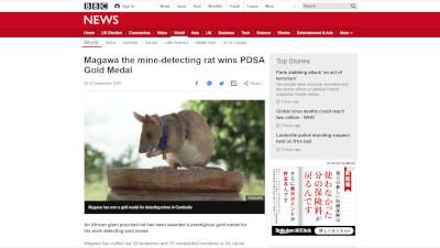 イギリス アフリカオニネズミ 地雷除去に関連した画像-02