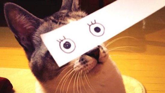 猫モンタージュに関連した画像-01