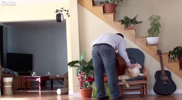 自業自得を味わったネコの飼い主に関連した画像-03
