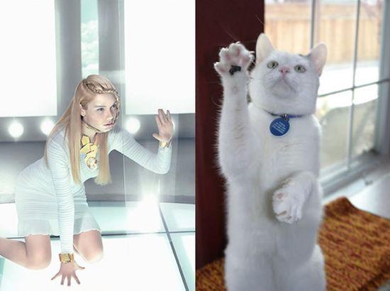 ネコだけど、モデルのポーズに関連した画像-13