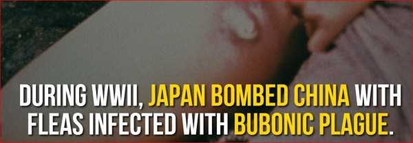日本の知られざる衝撃的な事実に関連した画像-04