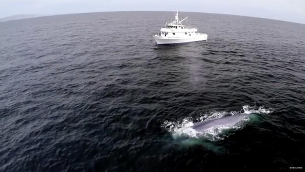 絶好のタイミングでシロナガスクジラが登場するハプニングに関連した画像-06