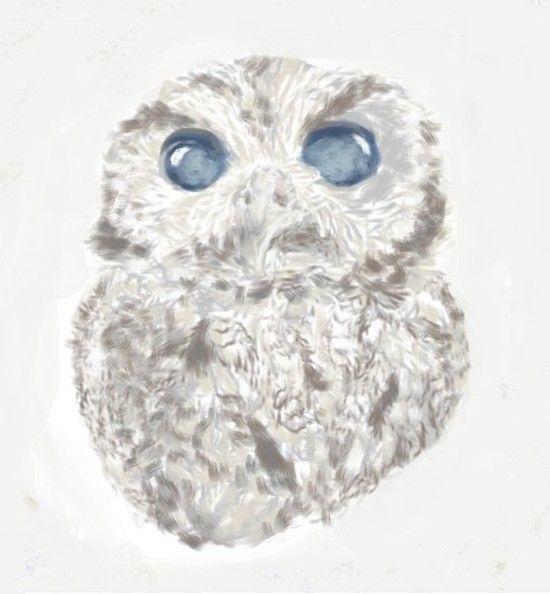 「宇宙の瞳」を持つ盲目のフクロウに関連した画像-09