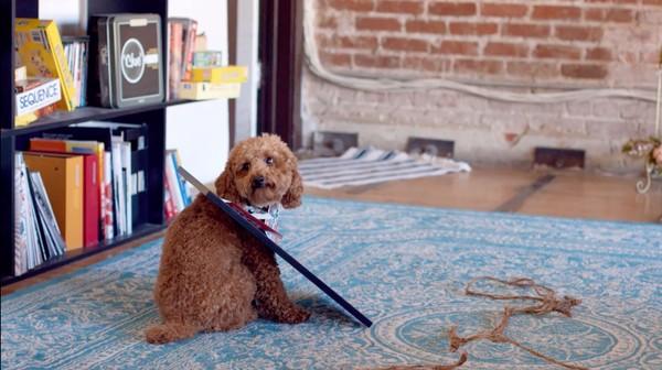 飼い主の居ぬ間に「犬と猫」がカンフー戦争に関連した画像-07