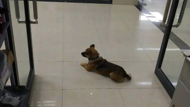 中国 病院 犬 ハチ公に関連した画像-01