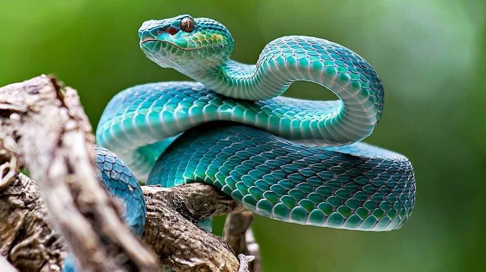 毒 ヘビ 人間 進化