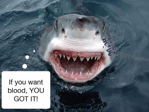 サメはAC/DCなどヘヴィメタルを好んで聴くに関連した画像-03