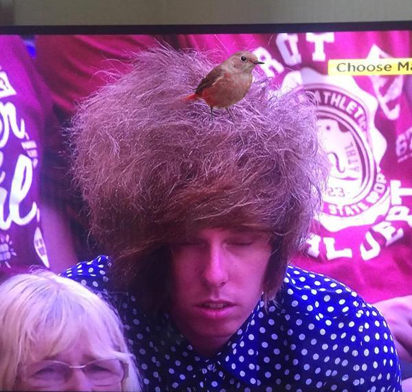 ウィンブルドン観戦中の男性の髪型が完全に「鳥の巣」に関連した画像-05