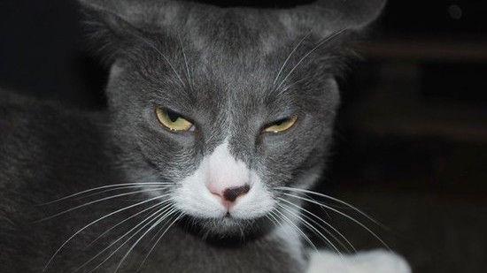ネコたちが教えてくれる、月曜日のツラさに関連した画像-07