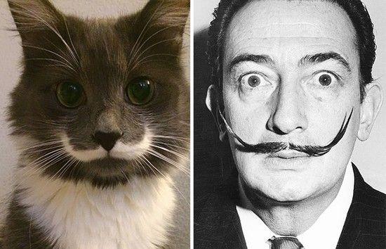 変装がうますぎるネコに関連した画像-12