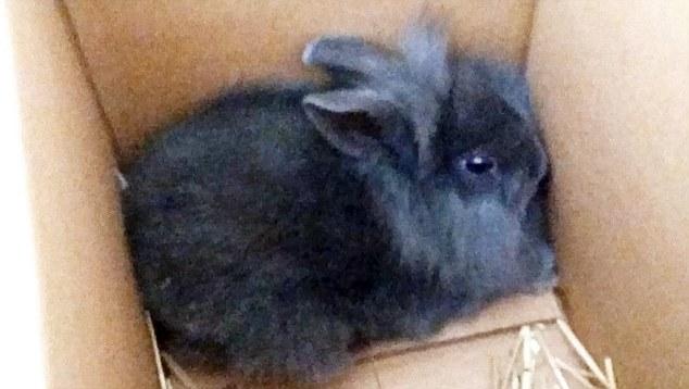 ラジオ放送中にウサギを撲殺(デンマーク)に関連した画像-04