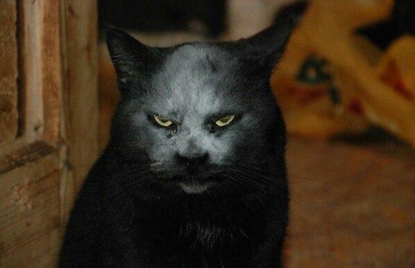 小麦粉をかぶってしまった猫が悪魔に豹変に関連した画像-03