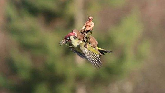 イタチがキツツキの背中に乗って、空を飛んだに関連した画像-03