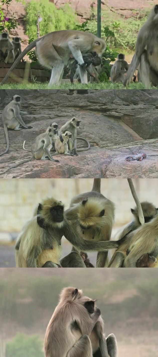 ラングールと猿ロボットに関連した画像-07