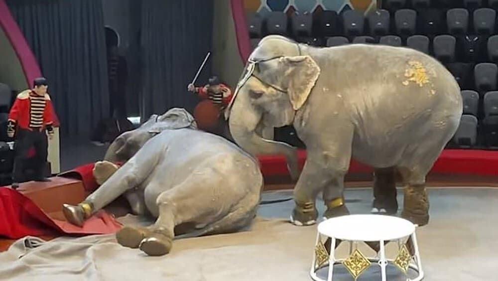 ゾウ サーカス 喧嘩 ロシア