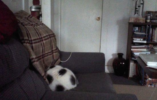 犬よりも猫の方が絶対に素晴らしいに関連した画像-03