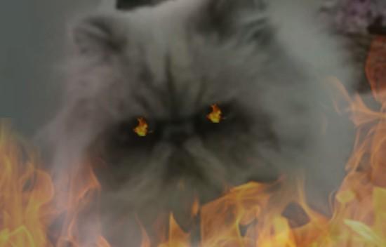 非道ネコに関連した画像-04