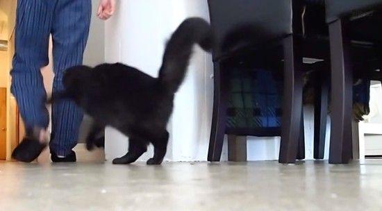 あなたを殺そうとしているネコに見られる、8つの行動パターンに関連した画像-02