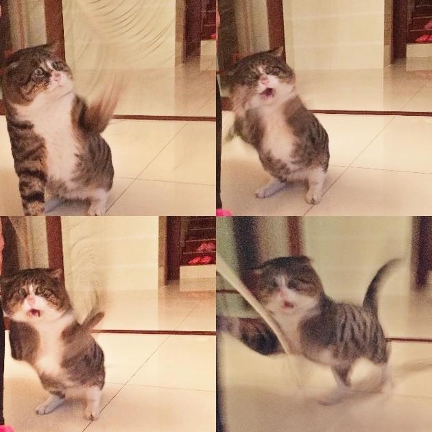 猫「アーフェイ」に関連した画像-04