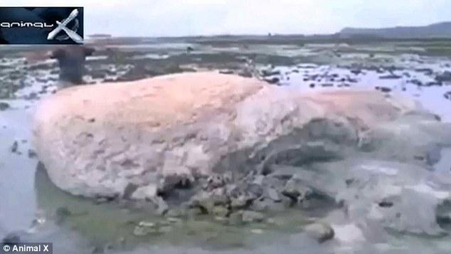 津波で打ち上がった「謎の巨大生物」に関連した画像-01