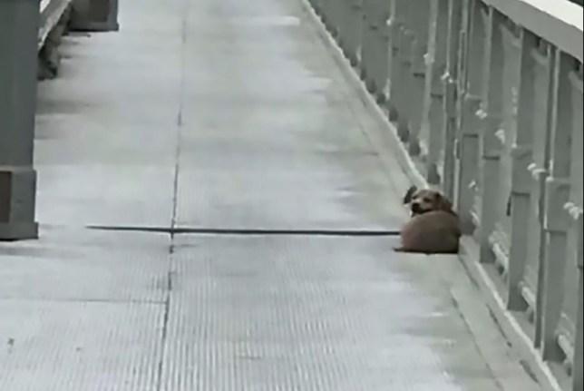 中国 飛び降り 犬に関連した画像-03