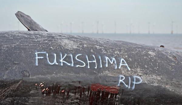 イギリスに座礁した巨大クジラに「フクシマ」に関連した画像-04