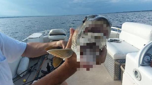 口が2つある魚に関連した画像-01