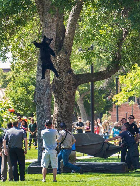 木から落ちたクマに関連した画像-02