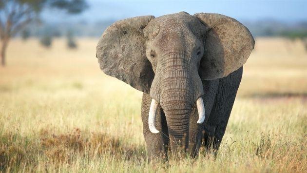 動物園 ゾウ 飼育員に関連した画像-01