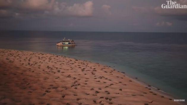 オーストラリア ウミガメ ドローンに関連した画像-04