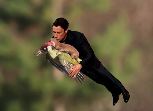 イタチがキツツキの背中に乗って、空を飛んだに関連した画像-08