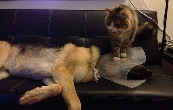 犬よりも猫の方が絶対に素晴らしいに関連した画像-08