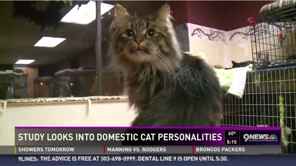 ネコは本気で人間を殺そうと企む情緒不安定な生き物に関連した画像-02