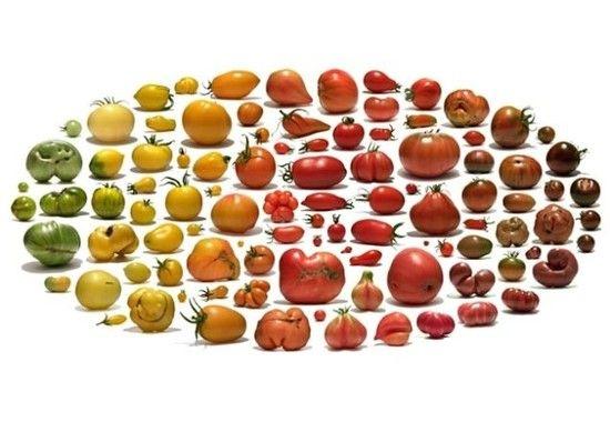 白と黒のトマトに関連した画像-04