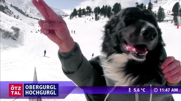"""スキー場のウェブカメラが捉えた""""ハプニング""""映像に関連した画像-08"""
