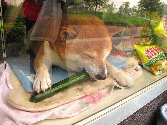 武蔵小金井にあるタバコ屋さん「鈴木たばこ店」に関連した画像-04