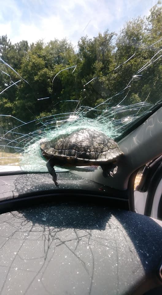 車 運転 フロントガラス カメに関連した画像-04