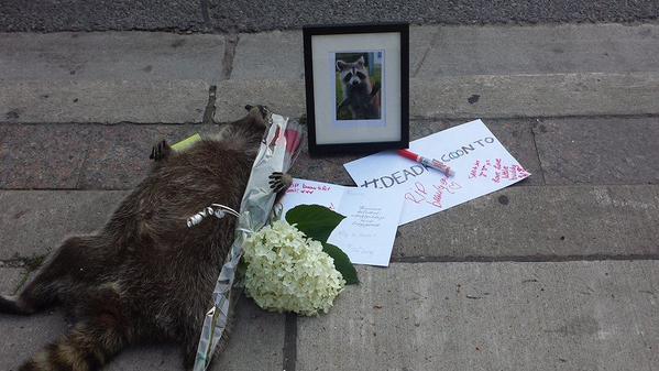 街中で死んだアライグマに、カナダ人が続々と追悼に関連した画像-01