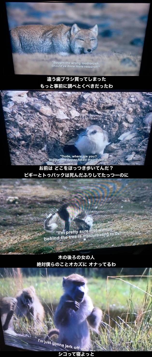 Netflix配信の『プラネットアース』で字幕バグに関連した画像-03