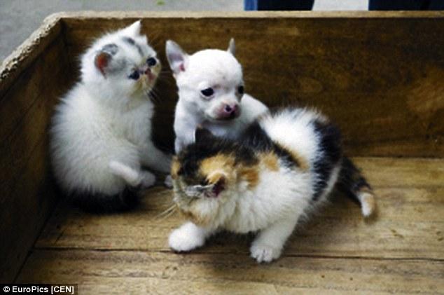 ネコから犬が産まれるに関連した画像-04