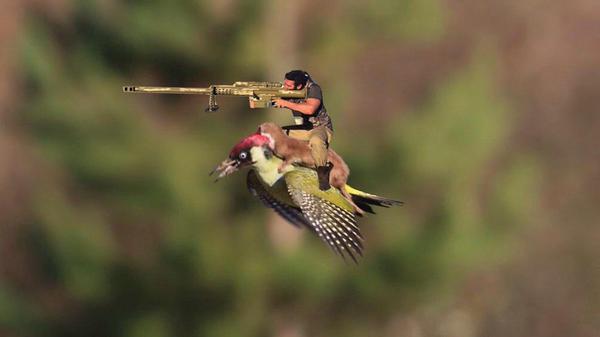 イタチがキツツキの背中に乗って、空を飛んだに関連した画像-09