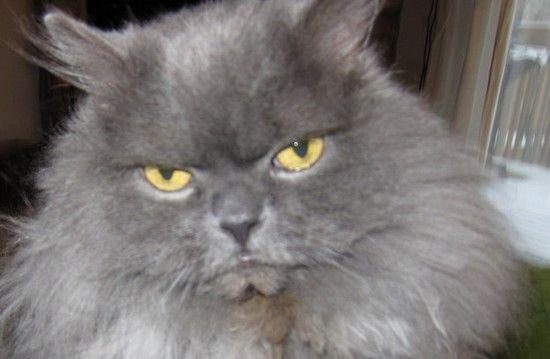 ネコたちが教えてくれる、月曜日のツラさに関連した画像-06