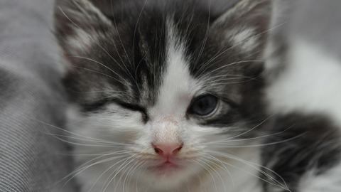 Cat-Winking