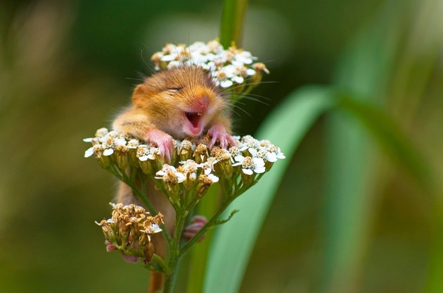 Comedy Wildlife Photography Awards 2017に関連した画像-03