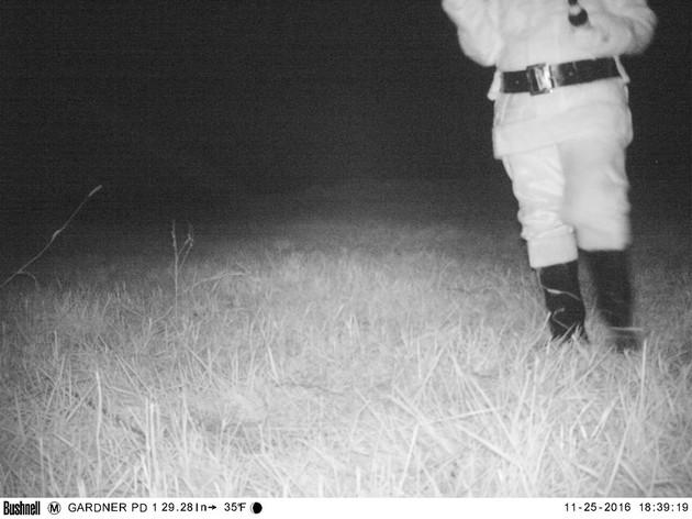 野生のピューマに関連した画像-10