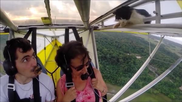 飛行中の飛行機の翼にネコに関連した画像-01