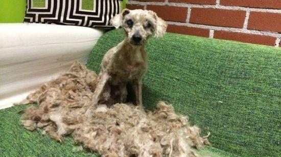 床下で1年間…亡き主人を一人待ち続ける犬を救出に関連した画像-04