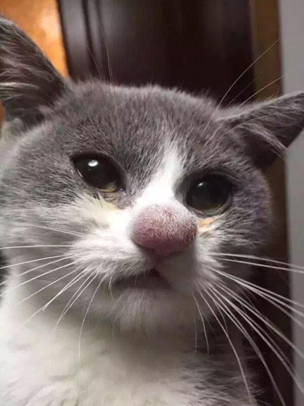 ハチに刺された10匹の猫に関連した画像-02